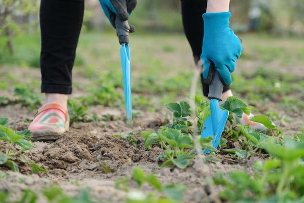 Tuinman cultiveert grond met handgereedschap Premium Foto