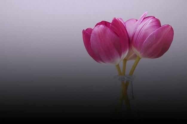 Tulp Bloemist Lente Natuur Verjaardag Bloem Flora Foto Gratis