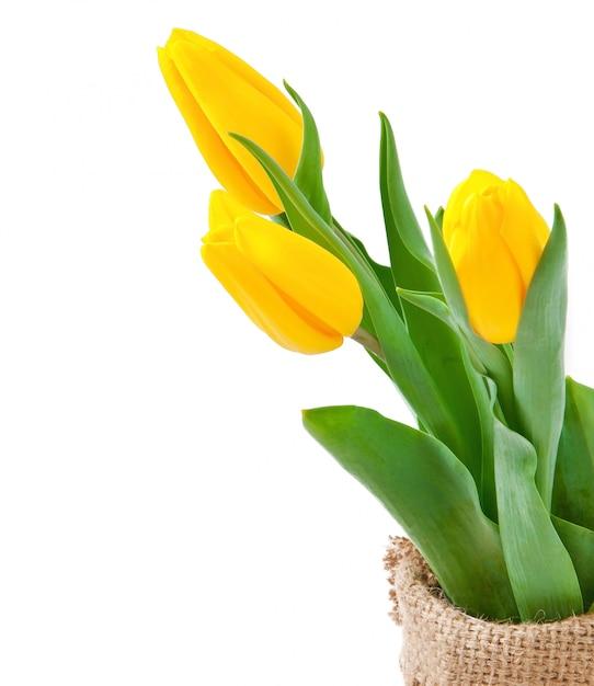 Tulpen boeket Gratis Foto