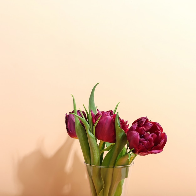 Tulpen in een vaas op helder, de ochtendschaduw tegen zonlicht. concept art voor wenskaart. Premium Foto