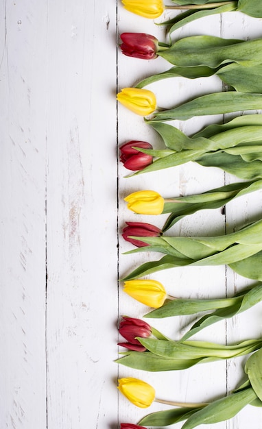 Tulpen op witte houten plankenvooravond Premium Foto