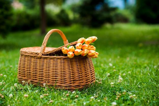 Tulpenboeket in een picknickmand op gras Gratis Foto