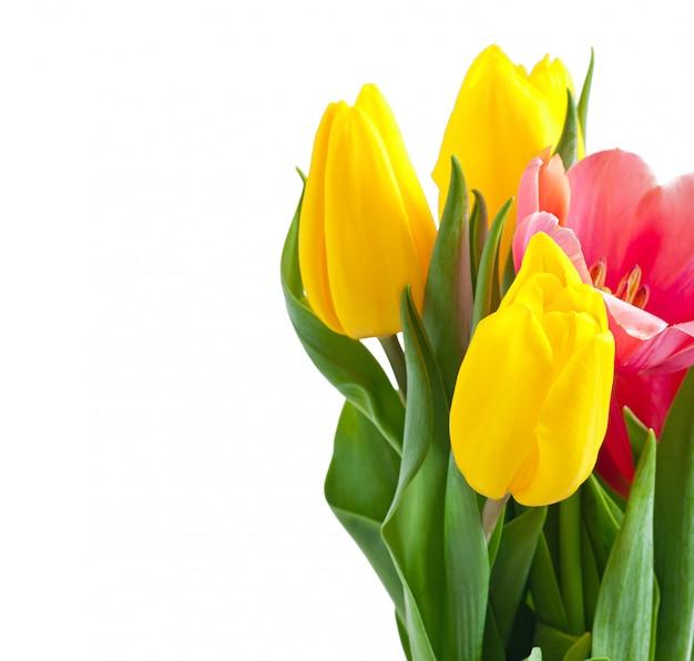 Tulpenboeket op wit Gratis Foto