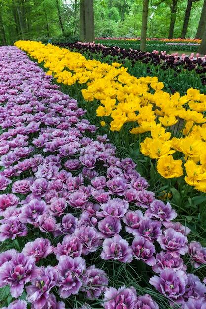 Tulpengebied in keukenhof-tuinen, lisse, nederland Gratis Foto