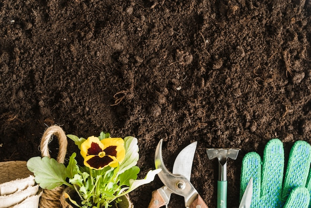 Turfpotten; viooltje plant; tuingereedschap en handschoenen op de grond Gratis Foto
