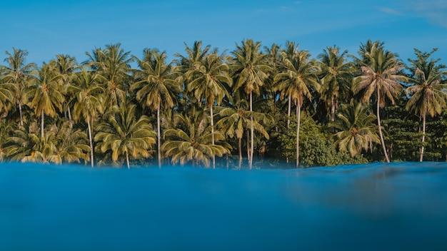 Turkoois helder water met de tropische bomen op het strand op de achtergrond in indonesië Gratis Foto