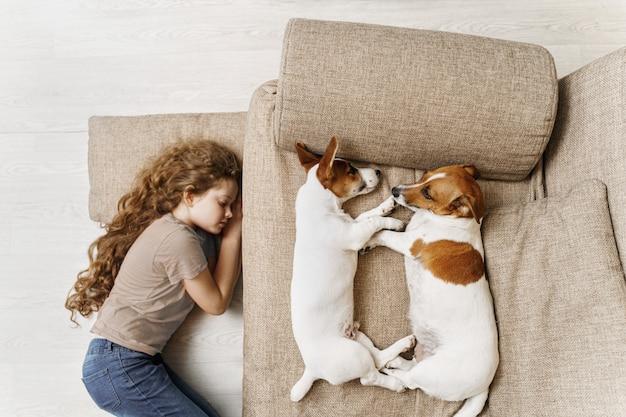 Twee jack russell slapen op het bed, en de eigenaar van het meisje slaapt op de vloer. Premium Foto