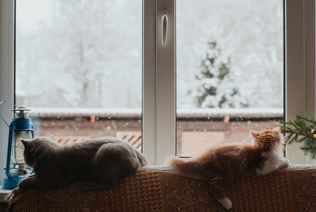 Twee katten liggen op de rug van de bank en kijken uit het raam Premium Foto