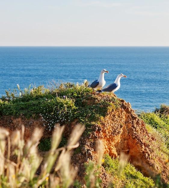Twee meeuwen op een rotsachtige kust in het gras. Premium Foto