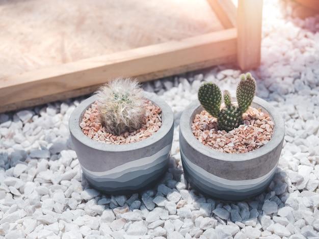 Twee mooie ronde betonnen potten met cactusplant op witte grind Premium Foto