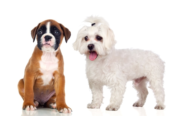 Twee prachtige honden Premium Foto