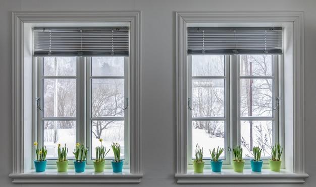 Twee ramen versierd met kleurrijke bloempotten van dwerggele narcissen, narcissen. lente met sneeuw buiten. Premium Foto