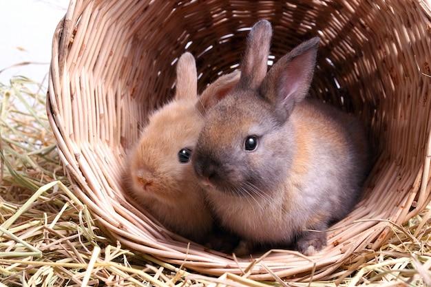 Twee schattige kleine konijnen spelen graag ondeugend in manden van hout en  stro. | Premium Foto