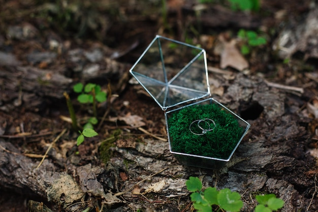 Twee trouwringen in een mooie glazen doos Premium Foto