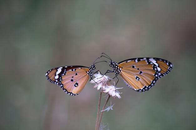 Twee vlinders op de bloem planten Premium Foto