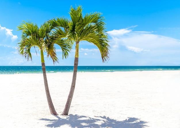 Tweelingenpalmen in het strand van florida, de vs met exemplaarruimte Premium Foto