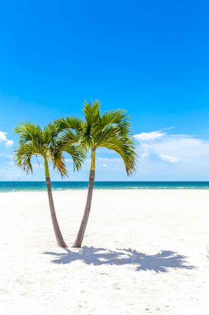 Tweelingenpalmen in het strand van florida, de vs Premium Foto
