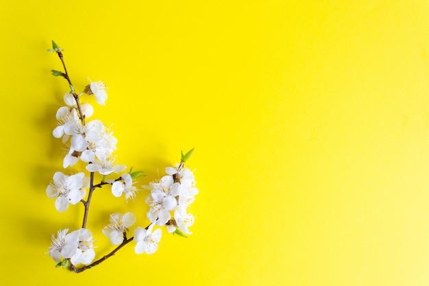 Twijg van bloeiende kers op een gele achtergrond Premium Foto