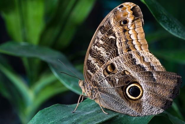 Uil vlinder in tropische habitat Gratis Foto