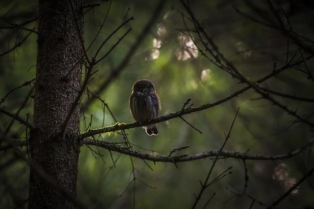 Uil zittend op de boomstam en camera kijken Gratis Foto