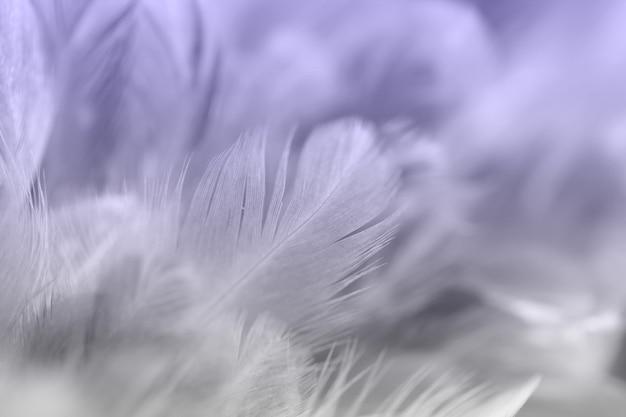 Uitstekende kippenveren op zachte en onduidelijk beeldstijlachtergrond Premium Foto