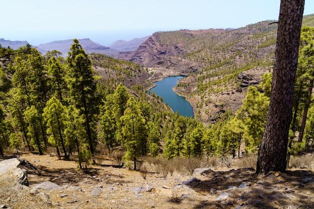 Uitzicht op de vallei vanaf de top van de berg met pijnbomen en meer met water op het eiland gran canaria. spanje, europa Premium Foto
