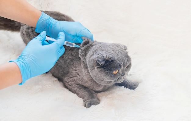 Vaccinatie van katten. veterinaire geneeskunde selectieve aandacht. Premium Foto
