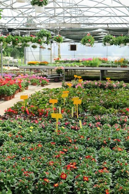 Van binnen in de kas naar een commercieel tuincentrum Premium Foto