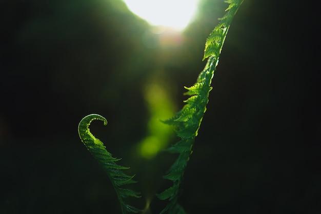 Varenbladeren Gratis Foto