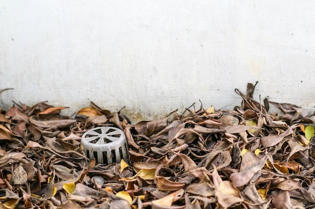 Veel droge bladeren verstopten de afvoer waardoor water in het gebouw lekte Premium Foto