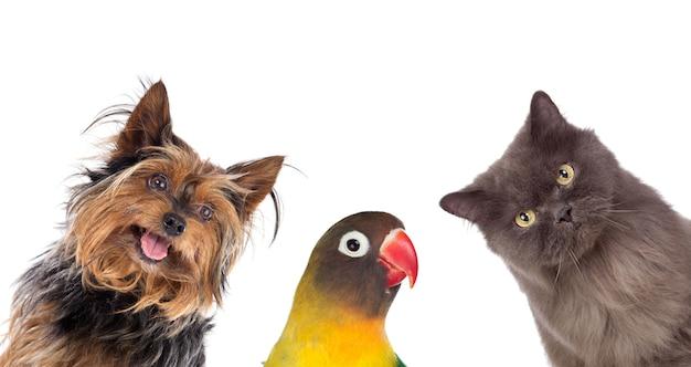 Veel huisdieren geïsoleerd Premium Foto