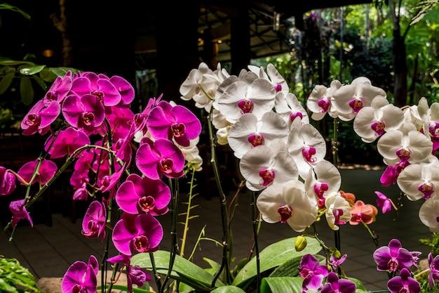 Kleur Veel Kleur : Veel kleur en soort orchideebloem foto premium download