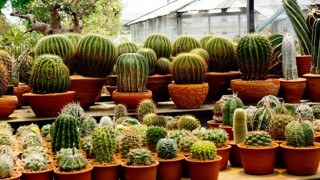 Veel soorten cactusplanten in de kinderkamer Premium Foto