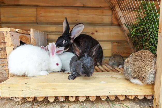 Veel verschillende kleine konijnen voeren op dierenboerderij in konijnenhok    Premium Foto
