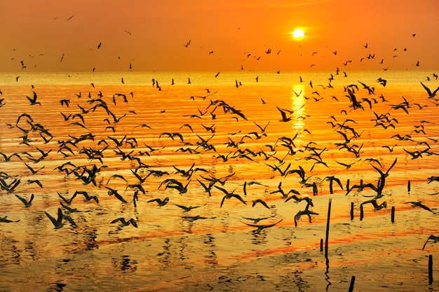 Veel zeemeeuw die over overzees in zonsondergangtijd vliegt Premium Foto