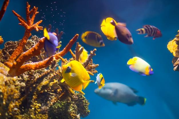 Veelkleurige exotische vis Gratis Foto