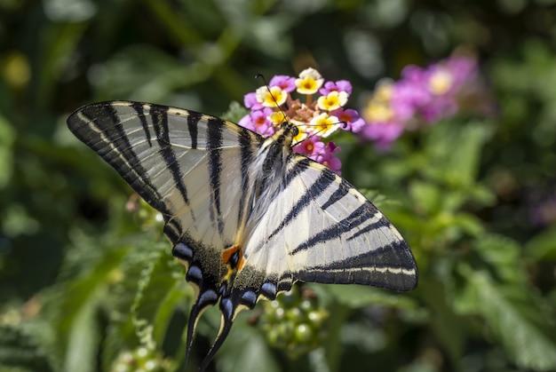 Veelkleurige vlinder zittend op bloem Gratis Foto