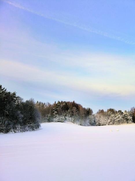 Veld bedekt met de sneeuw omgeven door groen onder het zonlicht in larvik in noorwegen Gratis Foto