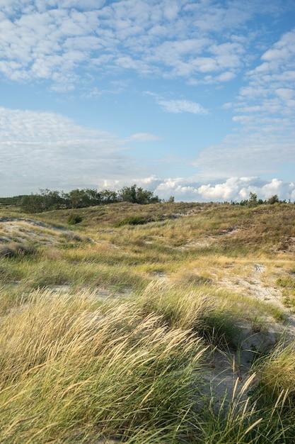 Veld bedekt met gras en struiken onder een bewolkte hemel en zonlicht Gratis Foto