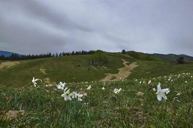 Veld bedekt met het gras en bloemen met heuvels onder een bewolkte hemel Gratis Foto