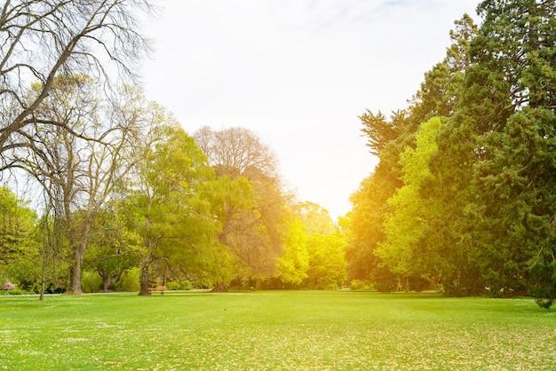 Veld met bomen en zonsondergang Gratis Foto