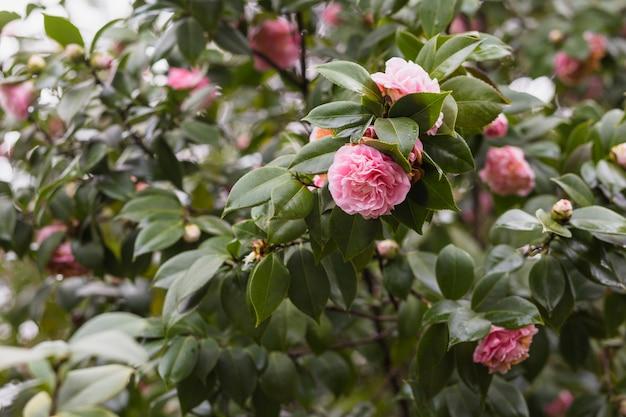 Vele roze bloemen die op groene takjes met dalingen groeien Gratis Foto