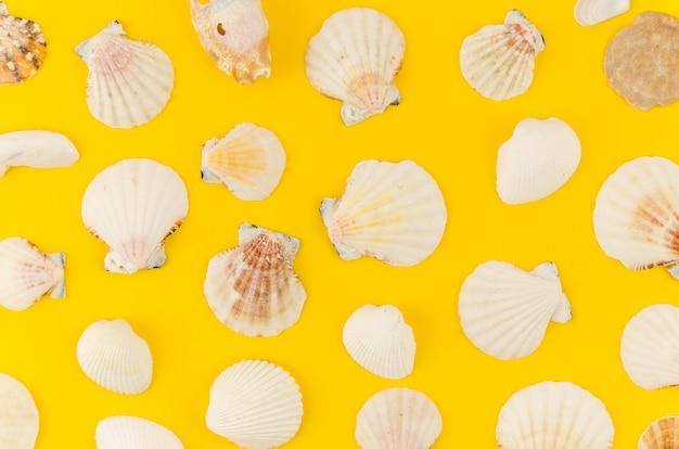 Vele zeeshells verspreidden zich op lijst Gratis Foto