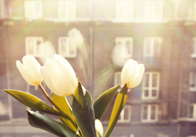 Venster met bloemen Gratis Foto
