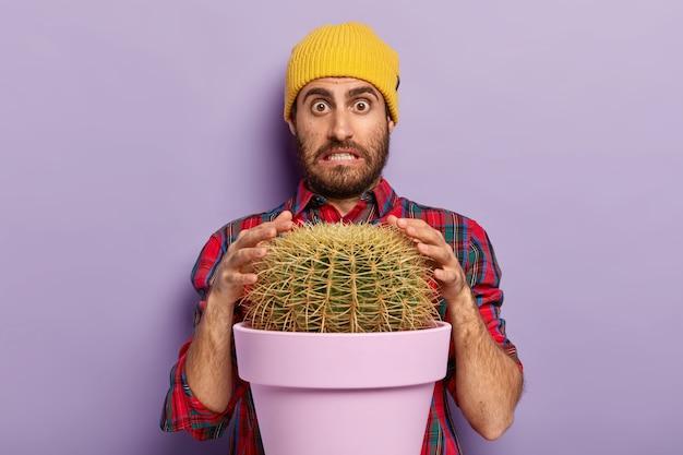 Verbaasde man met stoppels probeert stekelige cactus met handen aan te raken, klemt zijn tanden op elkaar en kijkt verbaasd naar de camera, gekleed in een stijlvolle hoed en shirt. guy poseert in de buurt van potplant binnen. Gratis Foto