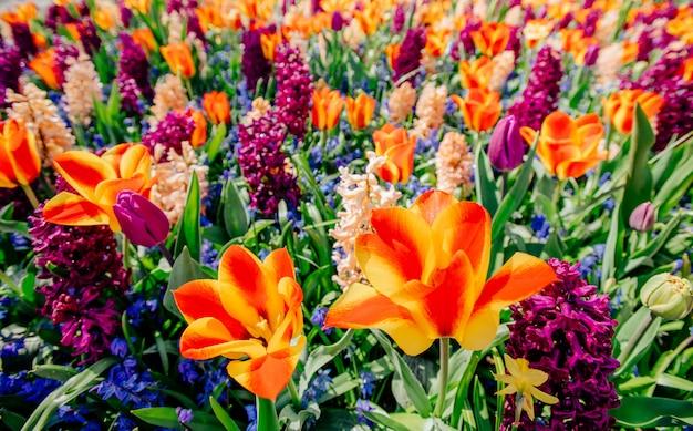 Verbazingwekkende kleurrijke bloem en groen gras Premium Foto