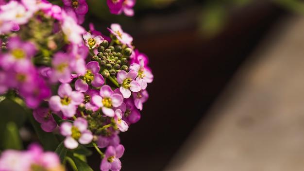 Verbazingwekkende violette verse wilde bloemen Gratis Foto