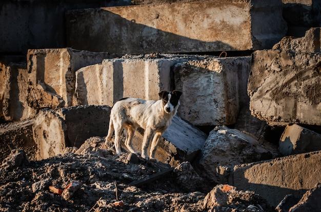 Verdwaalde hond onder betonplaten Premium Foto
