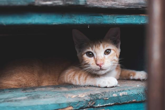 Verdwaalde kitten, kat in de stad Premium Foto