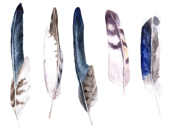 Veren aquarel set. eagle, owl en duck feathers Premium Foto